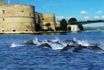 delfini-di-taras-833x321